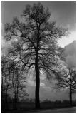 Leica_M3_073-1.jpg