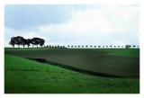 Limburg0132.jpg