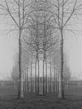 Trees-1_Rc.jpg