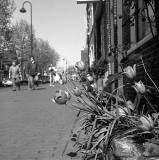 Tulpen_in_de_stad.jpg