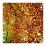 amersfoort-herfst-15.jpg