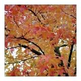 amersfoort-herfst-16.jpg