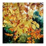 amersfoort-herfst-17.jpg