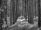 bomenrij_2.jpg