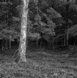 in_een_donker_donker_bos.jpg