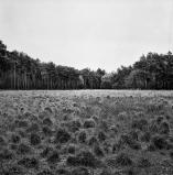 landschap_11.jpg