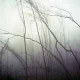 mist029-bewerkt.jpg