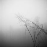 mist031-bewerkt.jpg
