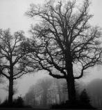 mist_2.jpg