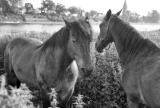 paarden_2.jpg