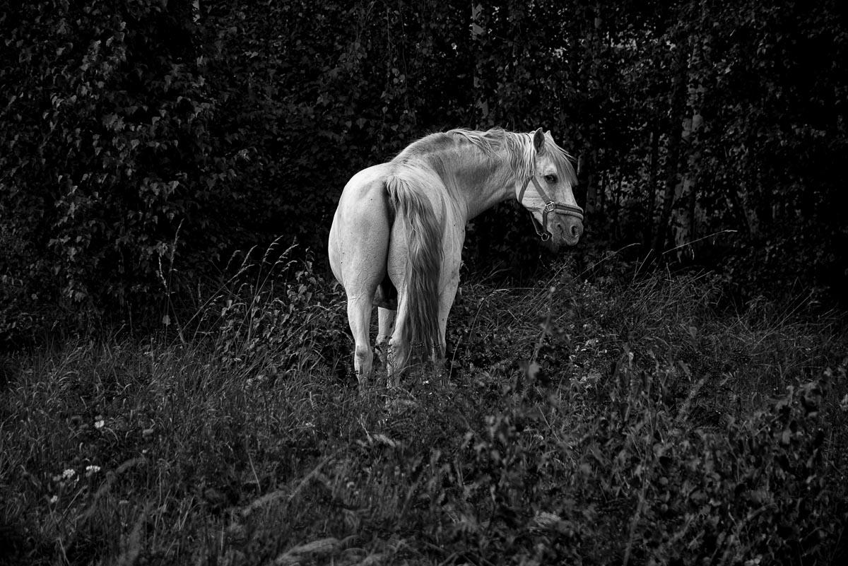 wit_paard-2